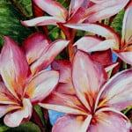 frangipani flora tropical