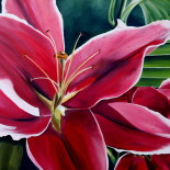 lillies flowers